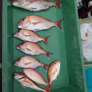 2021/04/03 近海タイラバ&根魚&ライトジギングの釣果