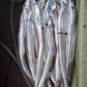 2021/06/13 タチウオ釣りの釣果