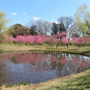 古河公方公園