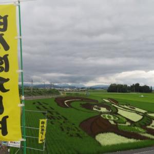 田んぼアート 小山市