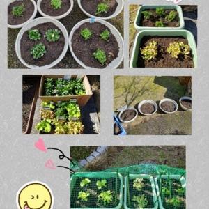 春のお花とお野菜の苗植え