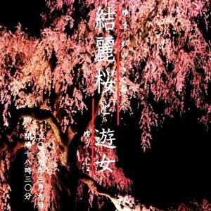 結麗桜と遊女