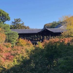 京都の2019年紅葉状況 人気の東福寺