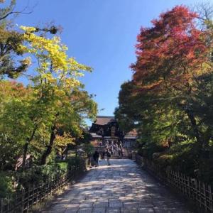 思わず紅葉が綺麗で立ち寄ったら...さらに素敵な景色の「大谷本廟」