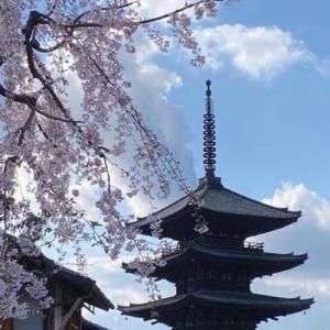 4月 最近の京都の様子
