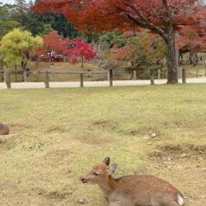 【奈良旅行】奈良の話題が増える予定です