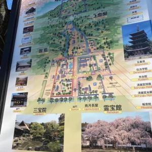 【醍醐寺】春にまた行きたいお寺です