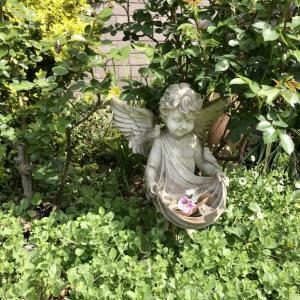 4月の庭とサロンから