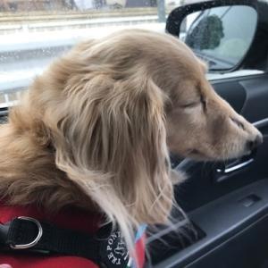 犬語を認識出来るナビ