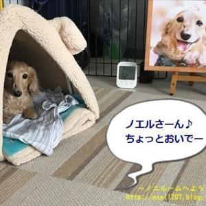 DOG DEPT モデル第3弾!