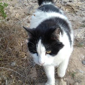 キプロス紀行 ~ 海中ケーブも猫だらけ!