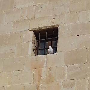 キプロス紀行 ~ コロッシ城に彩を添えるもの達。