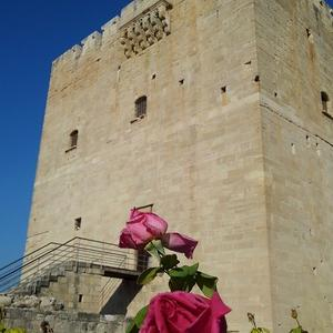 キプロス紀行 ~ コロッシ城の赤い薔薇。