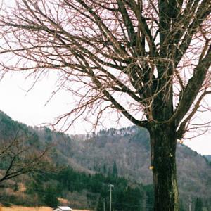 昭和の小学校の思い出のカケラがまだそこかしこに〜廃校舎ノスタルジー