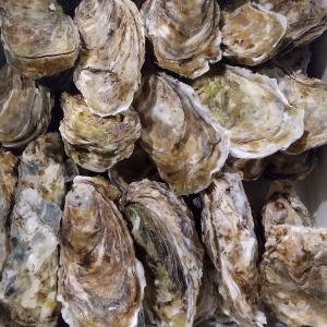 昆布森仙鳳趾産牡蠣
