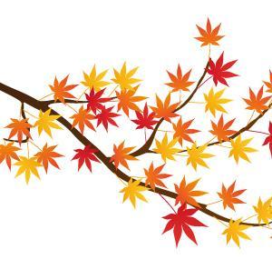 秋の京都をお得に満喫してくださいね(^_^*)