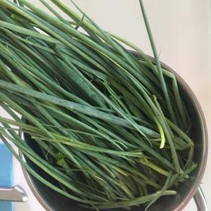 ●葉野菜をシャキっとさせる方法