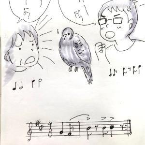 鳩の鳴き声