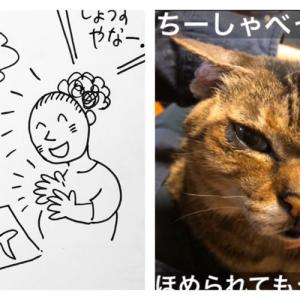 【ちー】飼い主の、なんと勝手なことよ。ほめられても喜ばない猫/子ども。