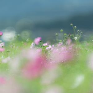 ヒカル*秋桜 6