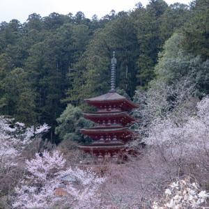 山のお寺のSAKURA 2