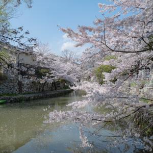 桜*さくら*SAKURA