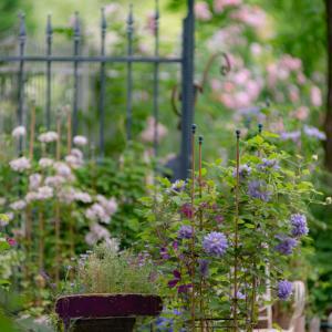 Secret rose garden 1