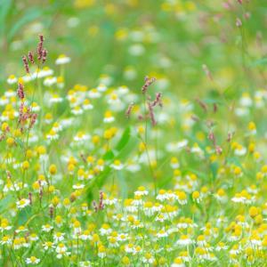 Lavender畑でよそ見して。。。3