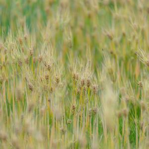 Lavender畑でよそ見して。。。9