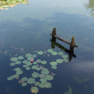 空と池の狭間で。。。