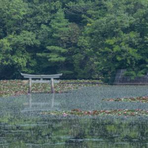 弁天池の沈み鳥居