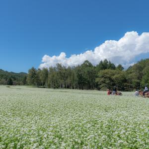 蕎麦畑で。。。
