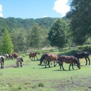 木曽馬たち。。。