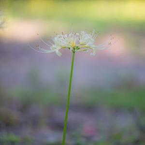 ひっそりと咲く。。。