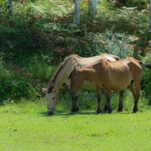 木曽馬たち。。。2