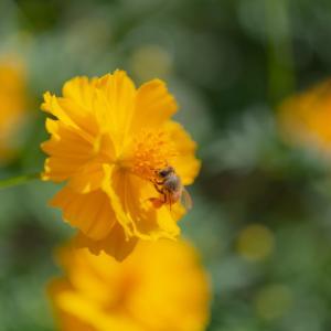 Yellow worker