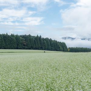 雲海と蕎麦畑