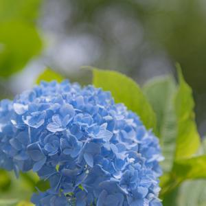 梅雨の季節のヒロイン 5
