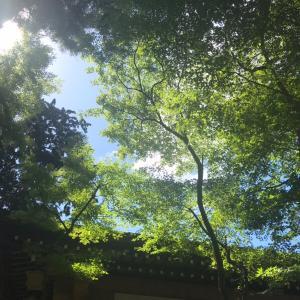 神社や神道に対する 理解を深め、国民の一人として、 質の良い体験