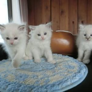 7月10日生まれの子猫たち=^_^=