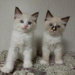 7月10日生まれの子猫たち8月31日撮影=^_^=