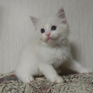 8月18日生まれの子猫達=^_^=
