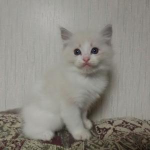 9月7日生まれの子猫達=^_^=