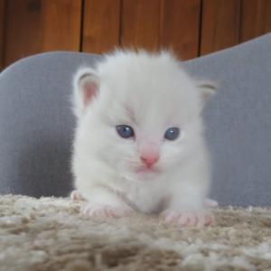 6月28日生まれの子猫達(=^・^=)