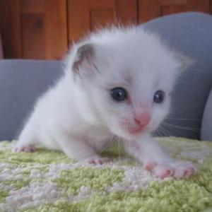8月30日、9月4日生まれの子猫達(=^・^=)