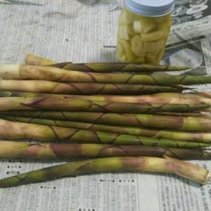 またまた根曲がり竹が届きました。