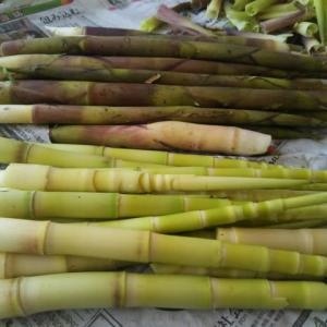 またまたまたまたまた、根曲がり竹が届きました。
