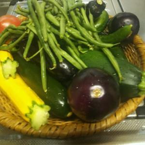 1日の野菜の収穫量は