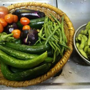 野菜価格の値上がりと我が家の家庭菜園