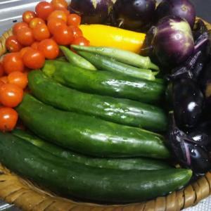 我が家の家庭菜園の近況報告